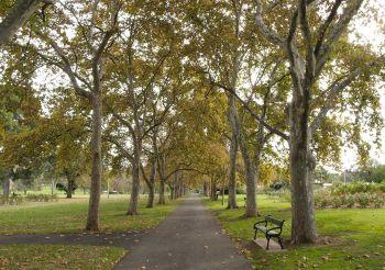 Rymill Park - Eastern parklands