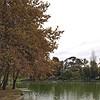 Lake at Rymill Park